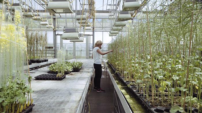Beruf Pflanzenzüchterin - Herausforderungen und Digitalisierung